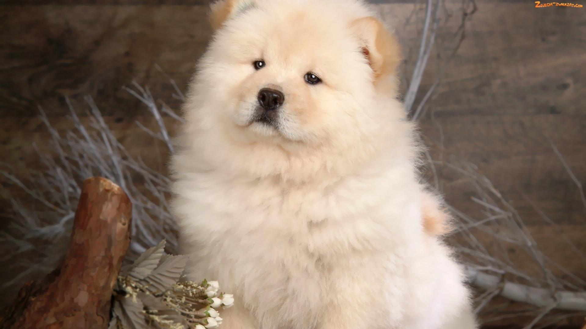 tapete zoo hund teddy - photo #13