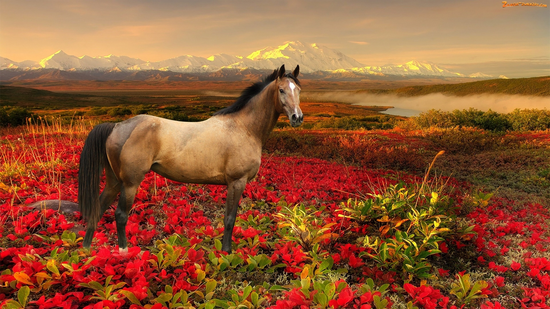 spring wild horse wallpaper - photo #32