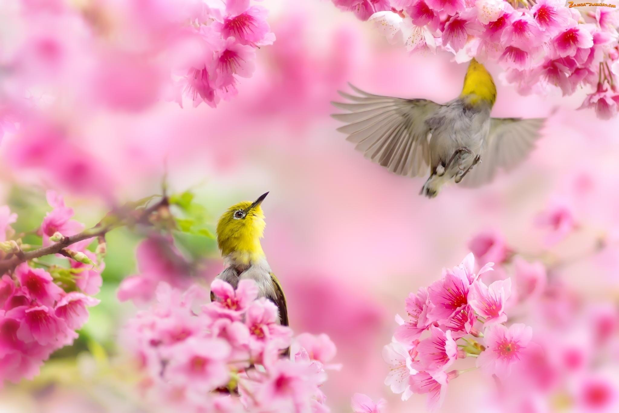 Znalezione obrazy dla zapytania ptaki wiosna