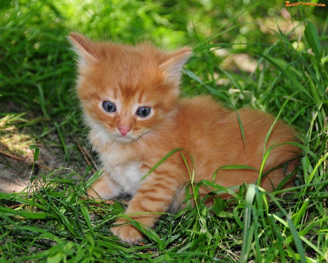 rudy chat Adoptez rudy : chien croisé braque dalmatien proposé à l'adoption dans un refuge spa dans la région nord pas de calais.